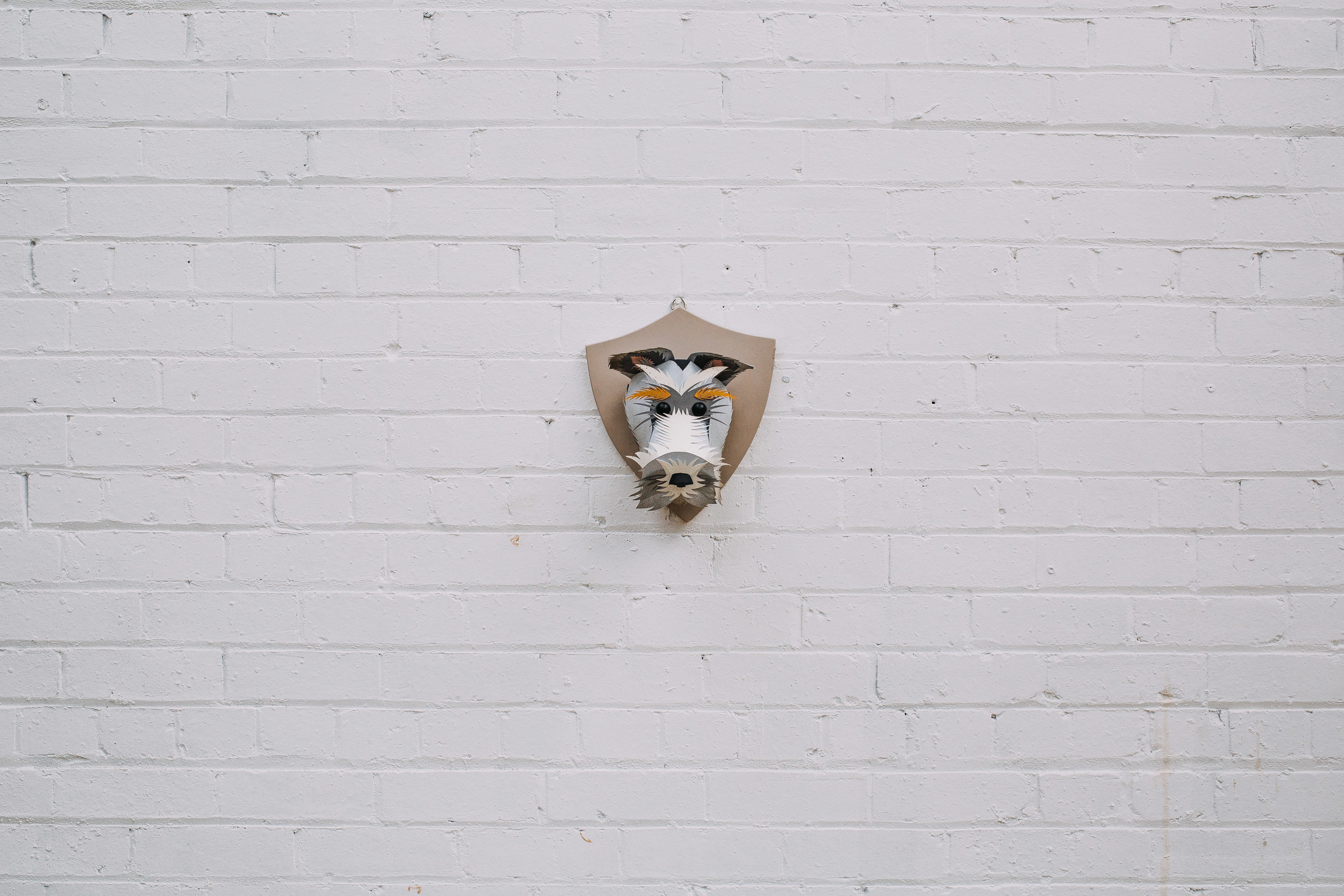 Doggies -243.jpg
