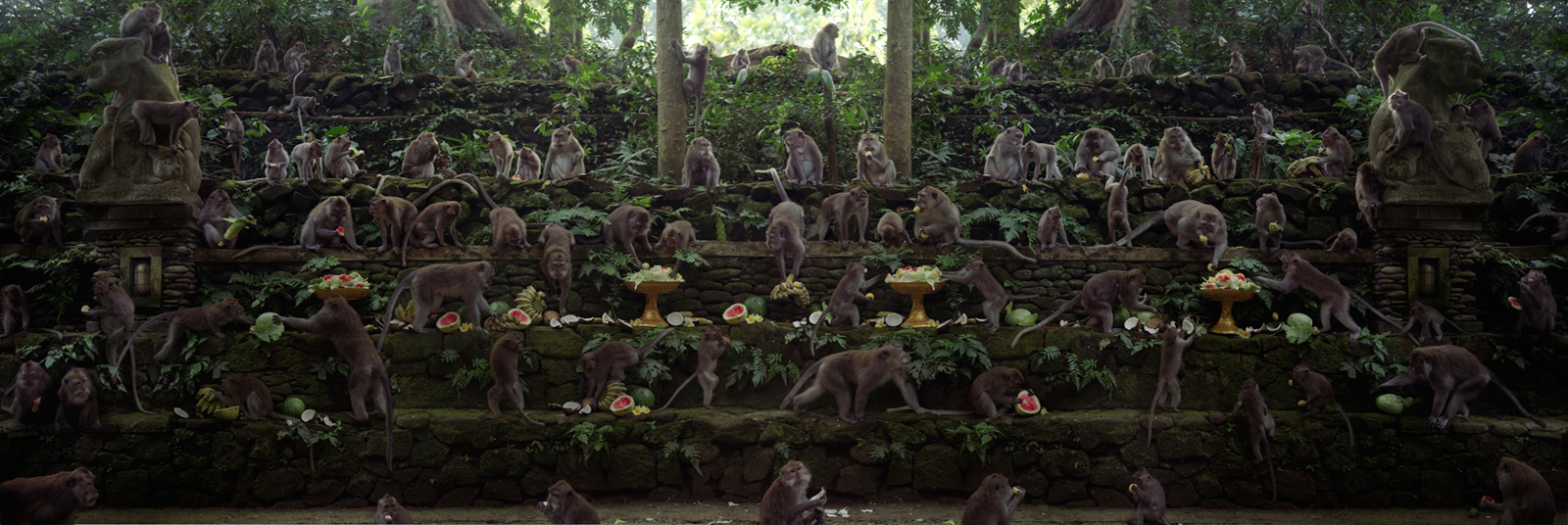 """The Long Tailed Macaque Feast  Indonesia, 2015  10""""x30"""" 