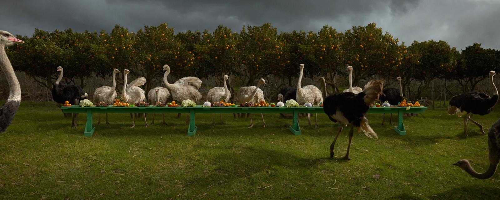 "The Ostrich Feast  South Africa, 2016  10""x25"" | 20""x50"" | 40""x100"""
