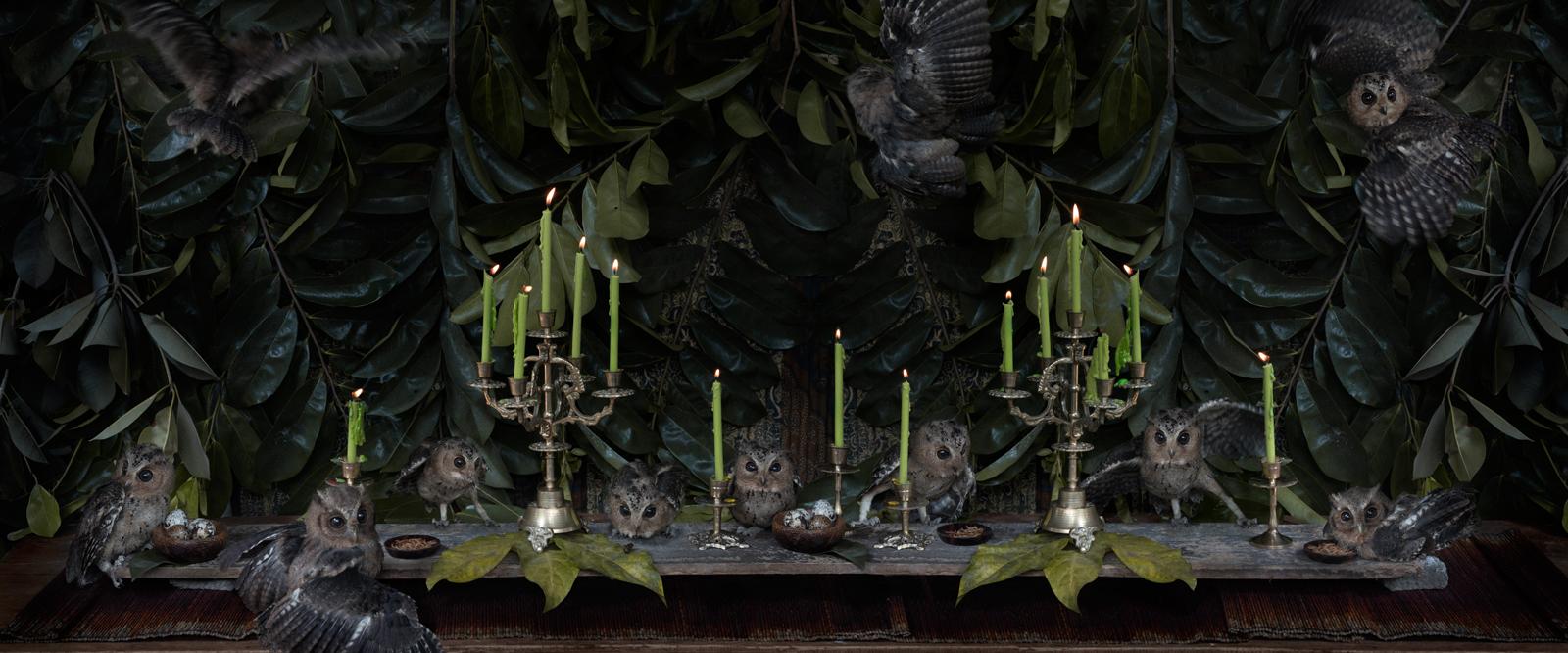 "The Owlet Feast  Indonesia, 2015  10""x24"" | 20""x48"" | 40""x96"""
