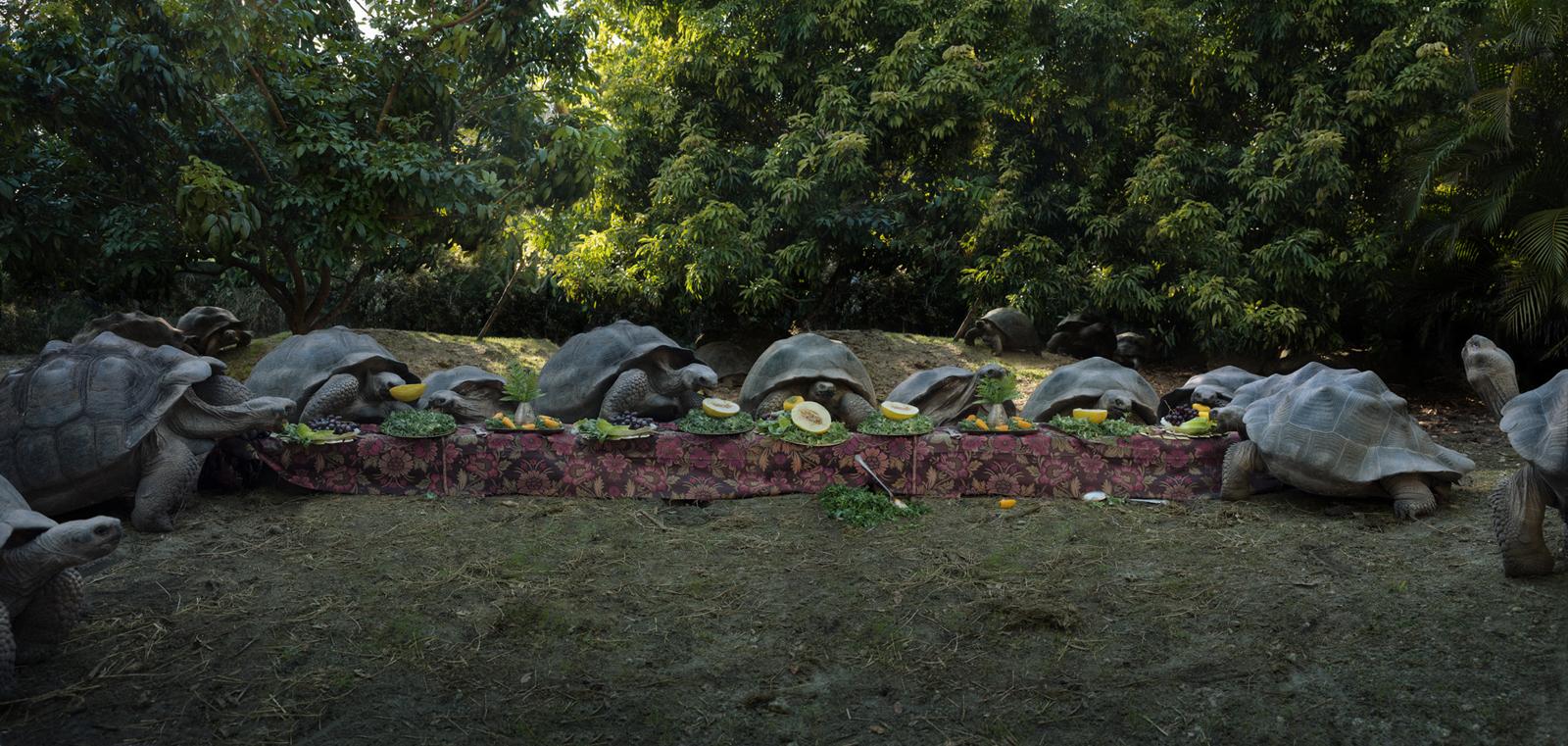 "Galapagos Tortoise  United States, 2017  10""x21"" | 20""x42"" | 40""x84"""