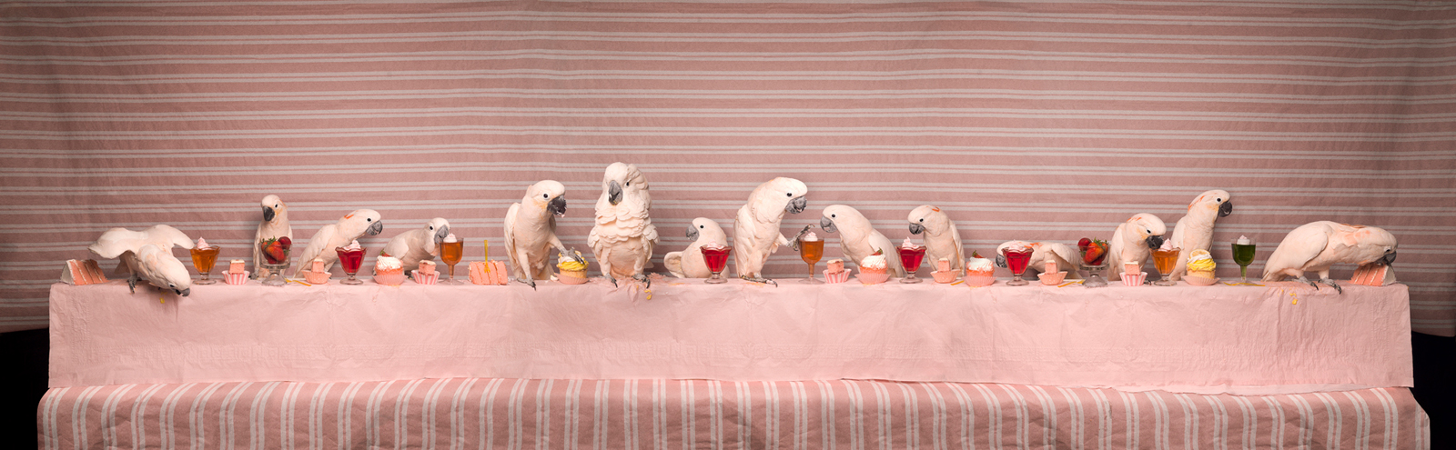 """The Moluccan Cockatoo Feast  United States , 2014  10""""x32"""" 