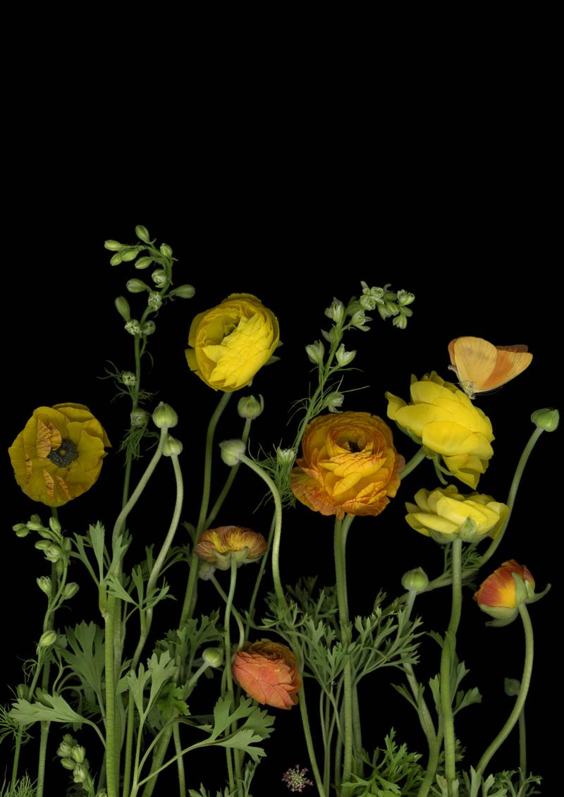 secretgarden_yellowranuculas_7 (deleted b'5ed36a7d2559d2ac66dcb7b5e4a08c75').jpg