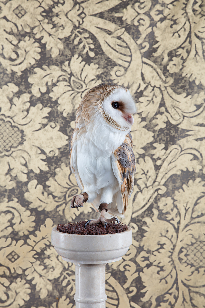 BARN OWL NO. 4250