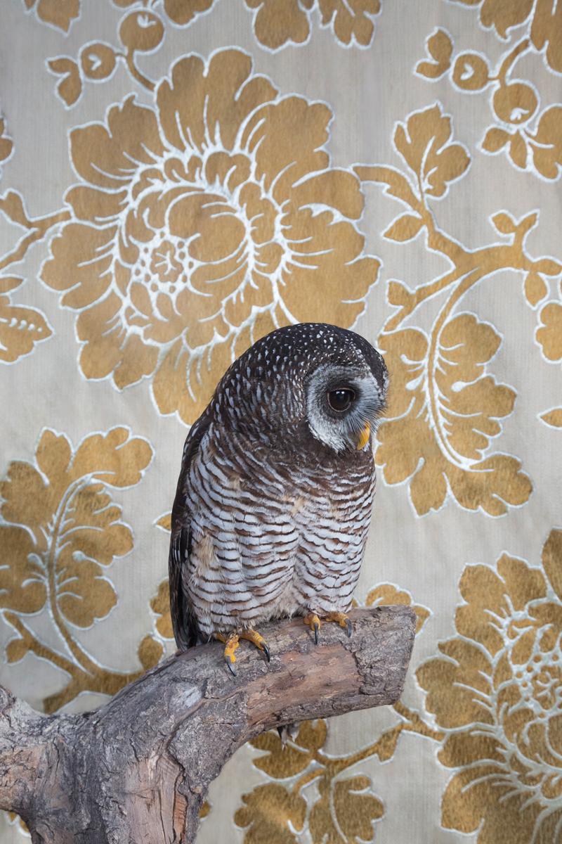 WOOD OWL NO. 7414