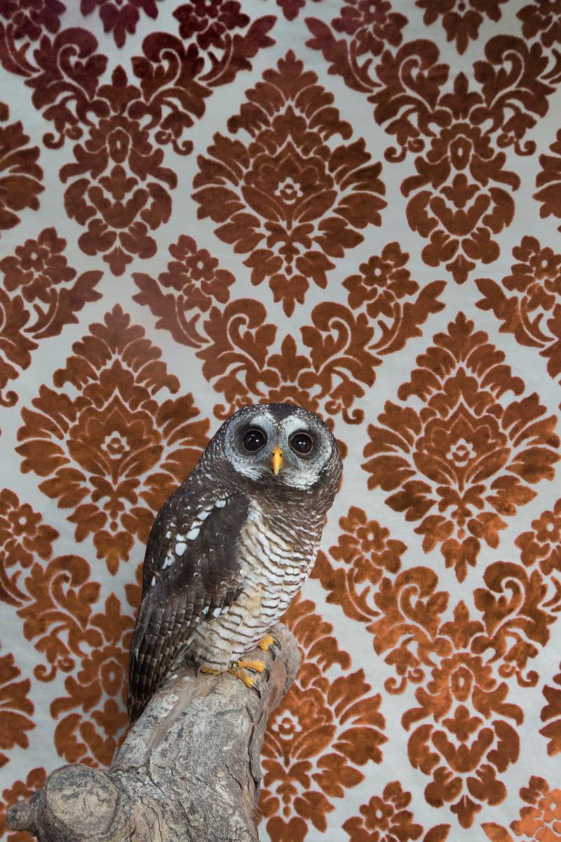 WOOD OWL NO. 7391