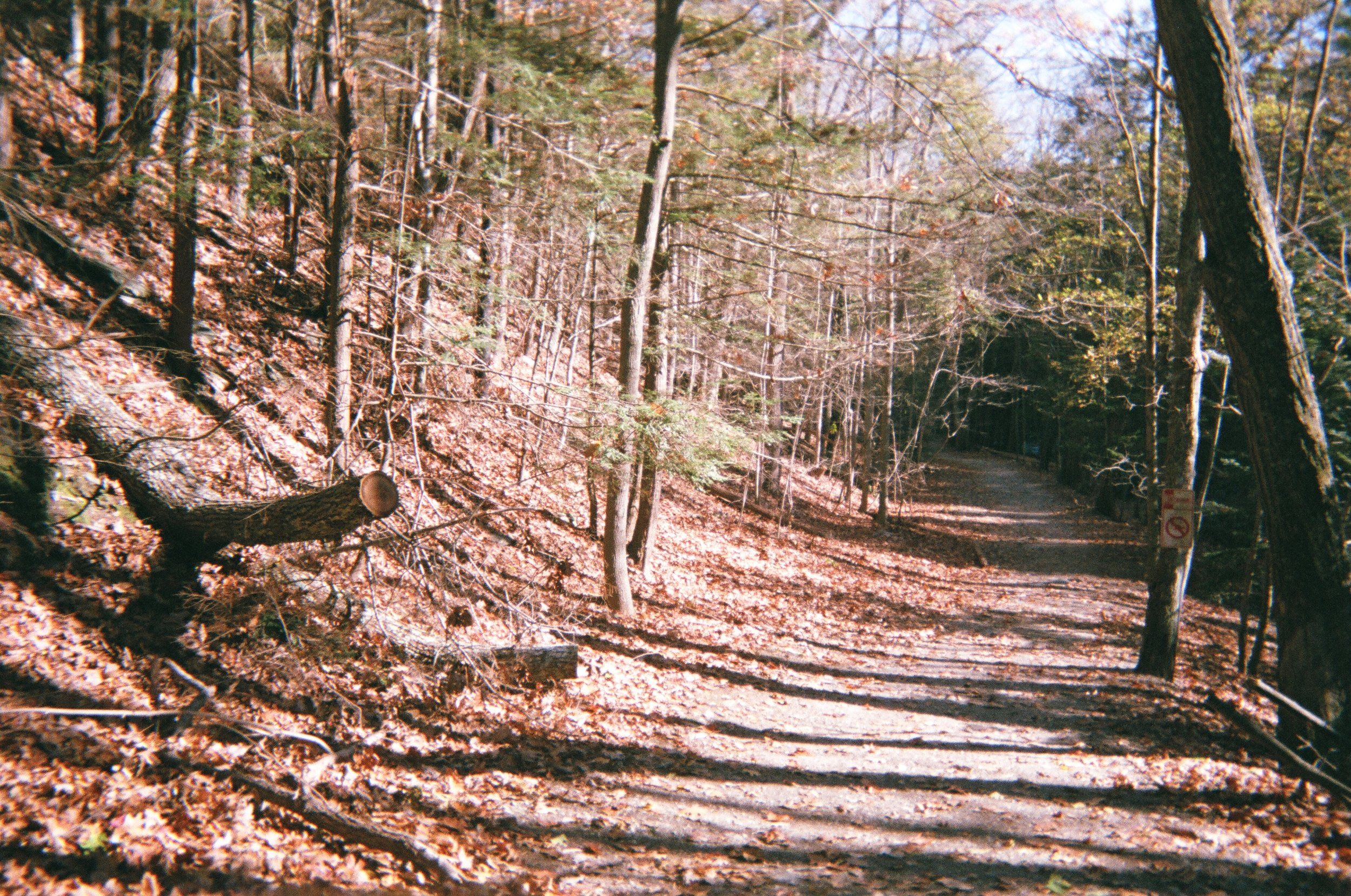 Pathway on a stop in Taconic State Park.