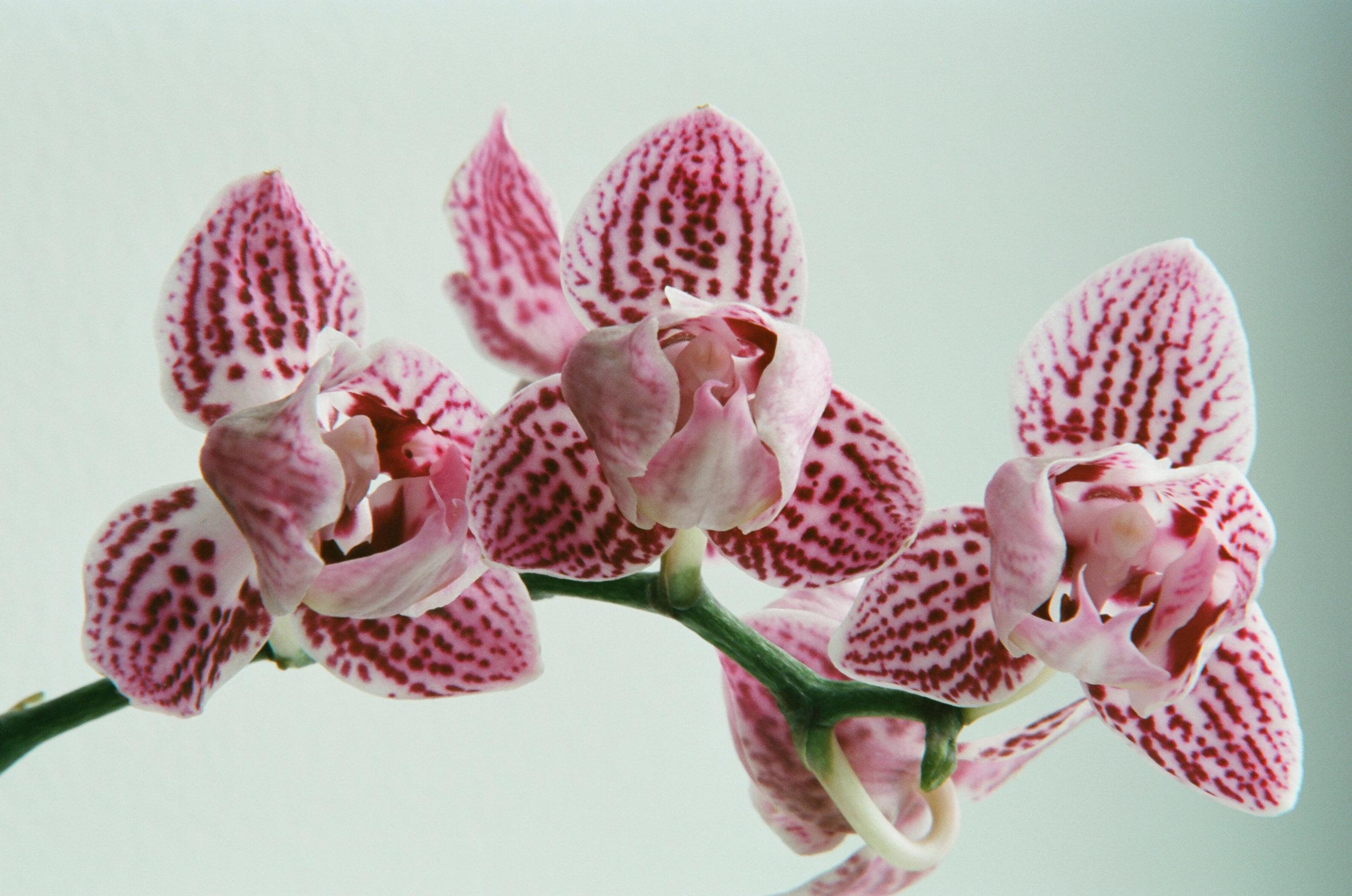 orchid 1.jpeg