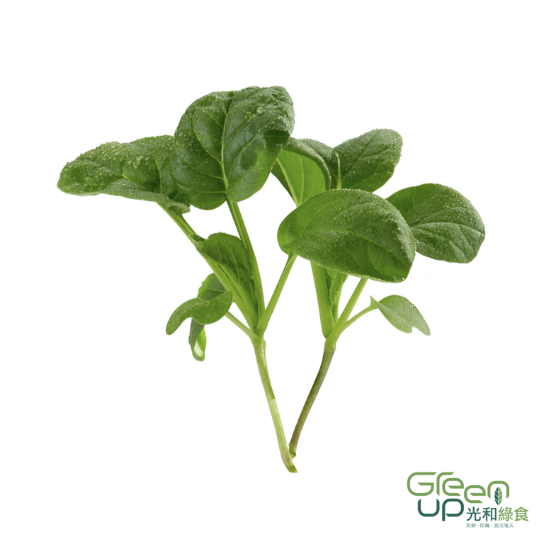 Premium Greens Mx 頂級綠色組合
