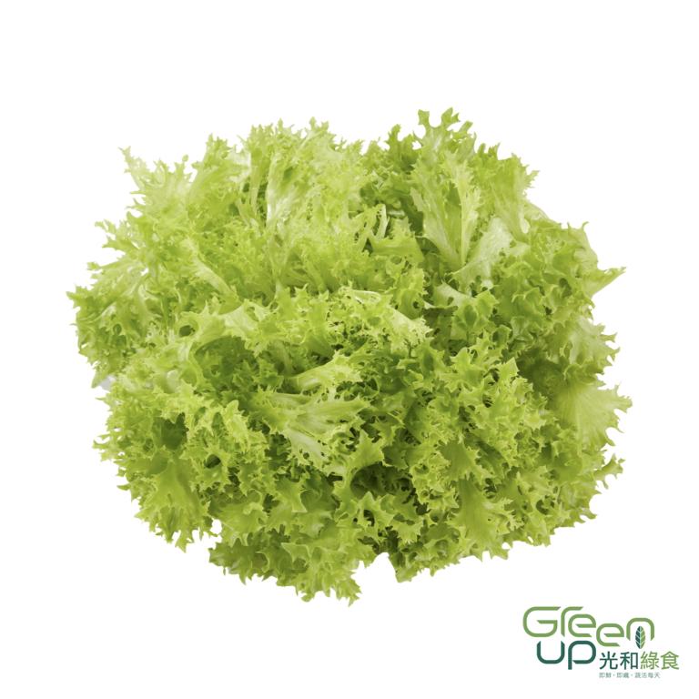 Multiblond Multileaf 綠火焰萵苣