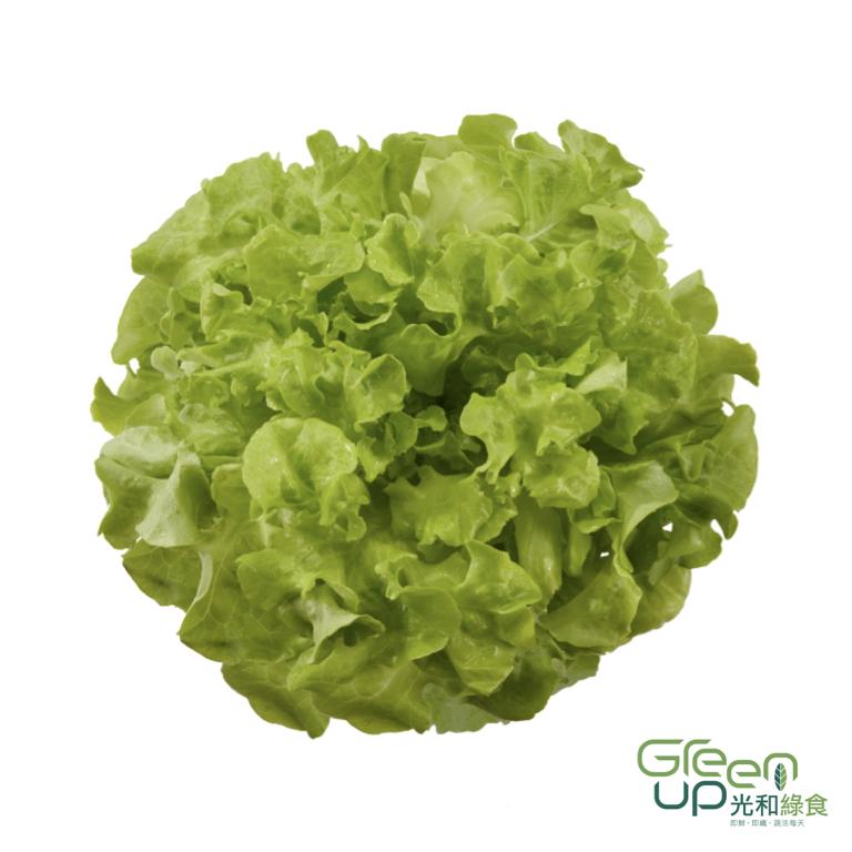 Panisse 帕尼斯綠橡木萵苣