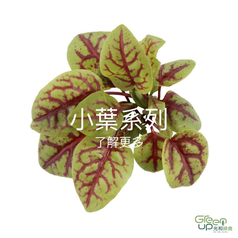 蔬菜介紹 首頁按鈕.001.jpeg