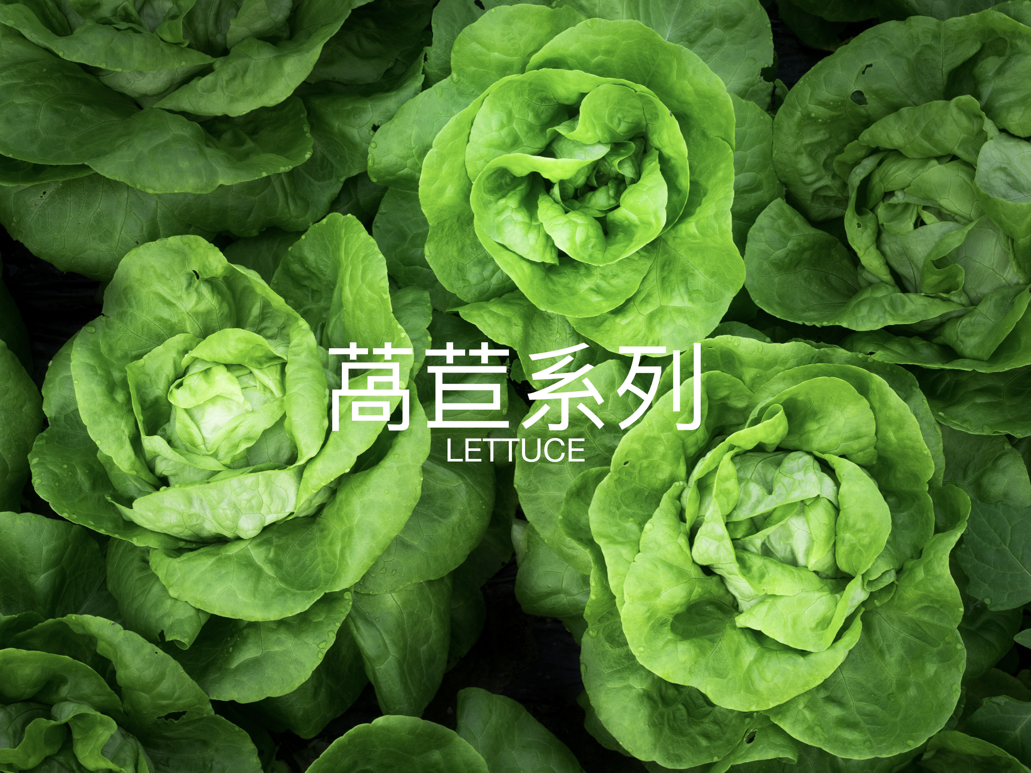 green up 蔬菜介紹 個別圖片.001.jpeg