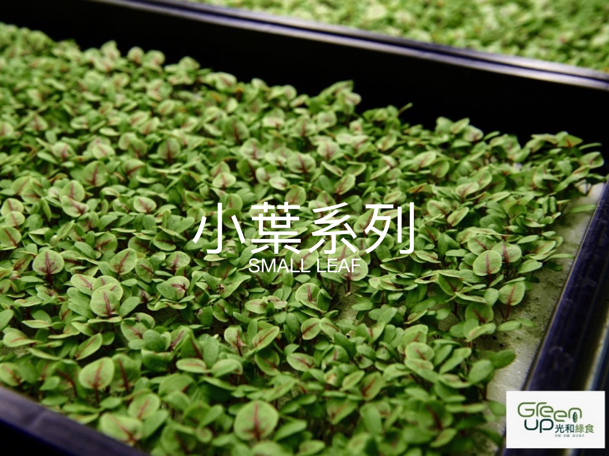 green up 蔬菜介紹 個別圖片.002.jpeg