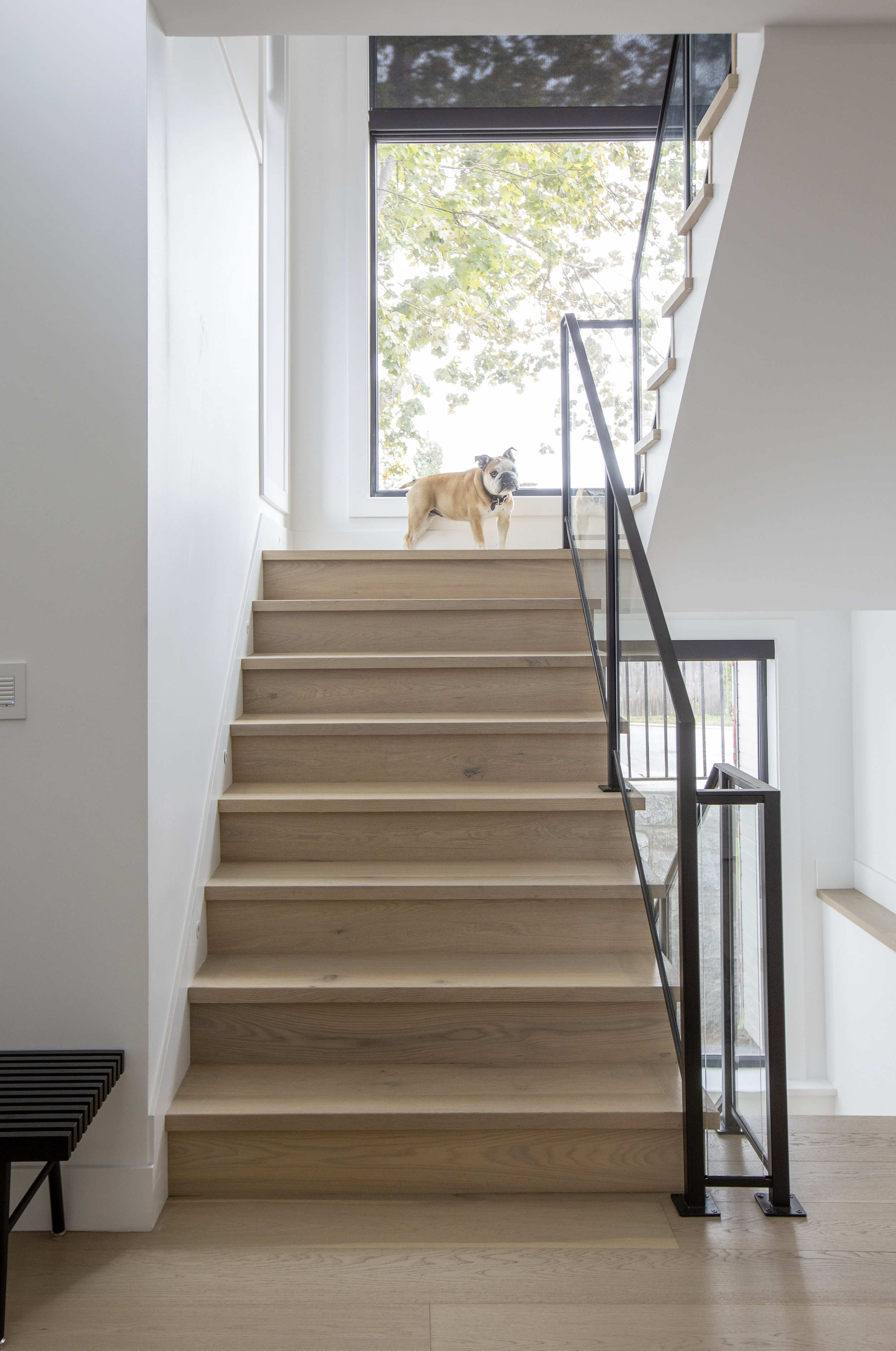A bulldog who is a good boy stands at the top of the stairs which leads to a large bay window in East 13th Street.