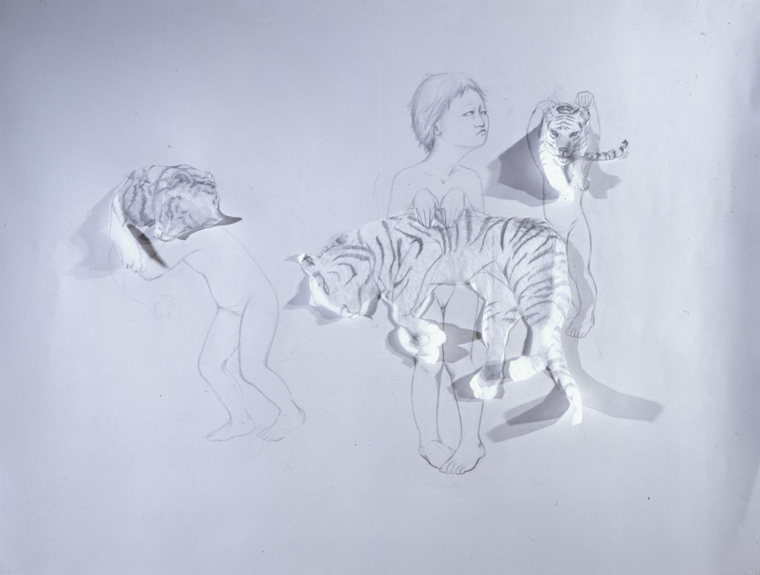 Paper Tigers , 2004 Graphite, kozo on gray paper 38 X 50 inches