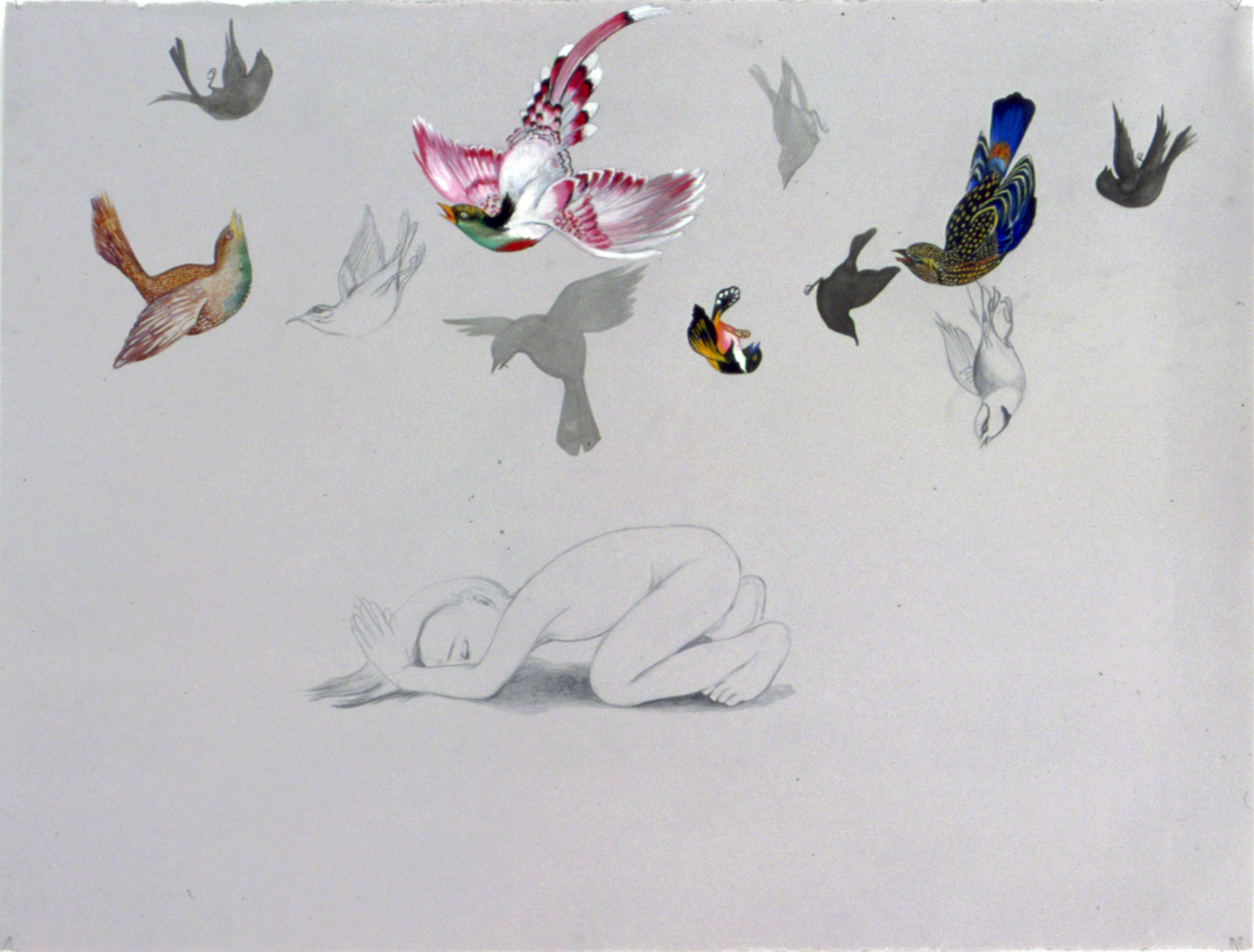 Pray For The Death Of Birds , 2004 Graphite, ink, gouache on gray paper 38 X 50 inches Private collection