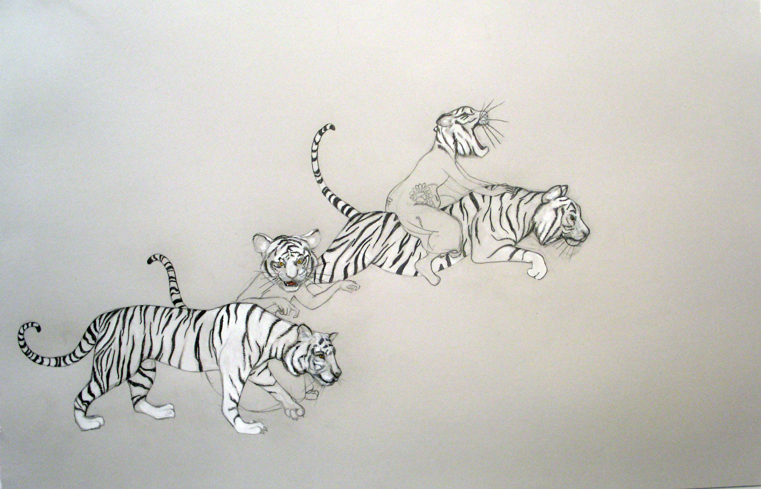Tiger Girls II , 2006 Graphite, watercolor on gray paper 25 X 38 inches Private collection