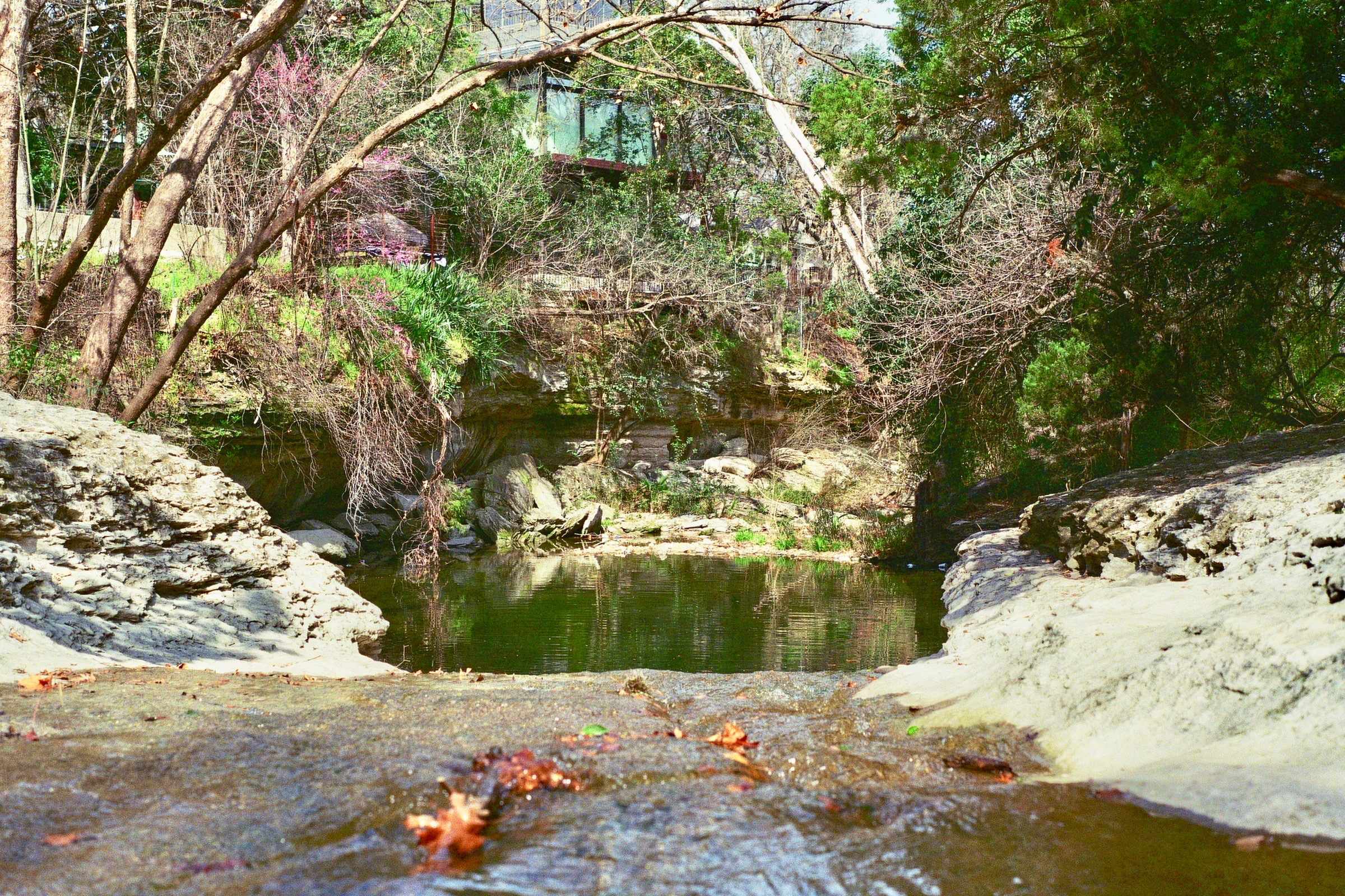 A pool along Bouldin Creek, hidden back in the neighborhood between homes.  Austin, TX.  Kodak Ultra Max 400. Pentax K1000. Fletcher Berryman 2019.