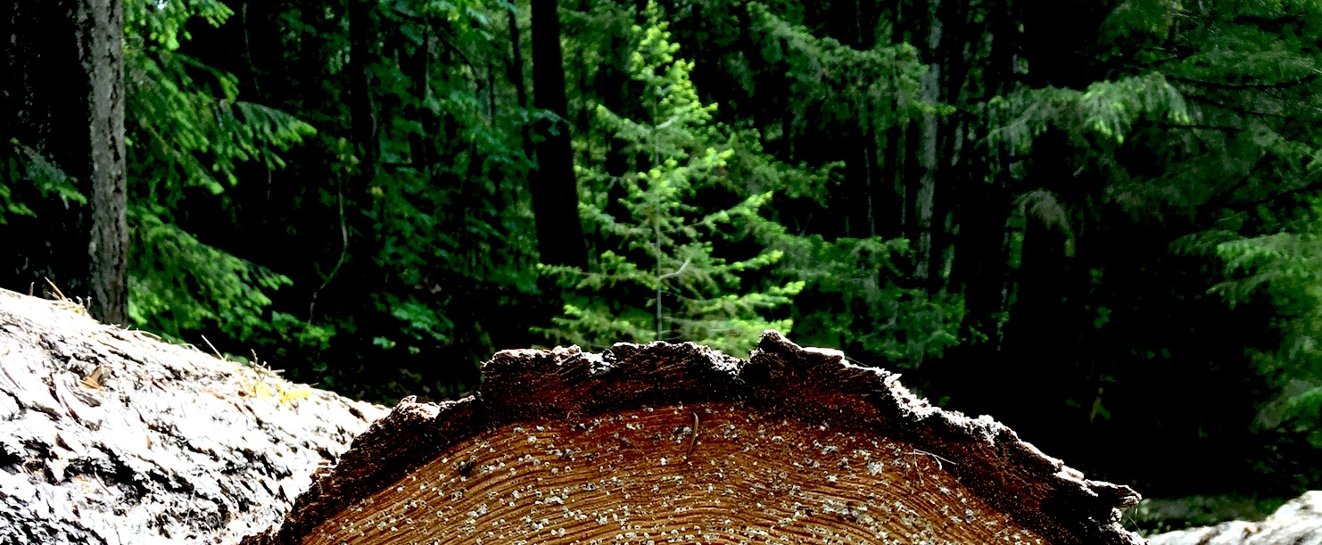 harvest-log-1.jpg
