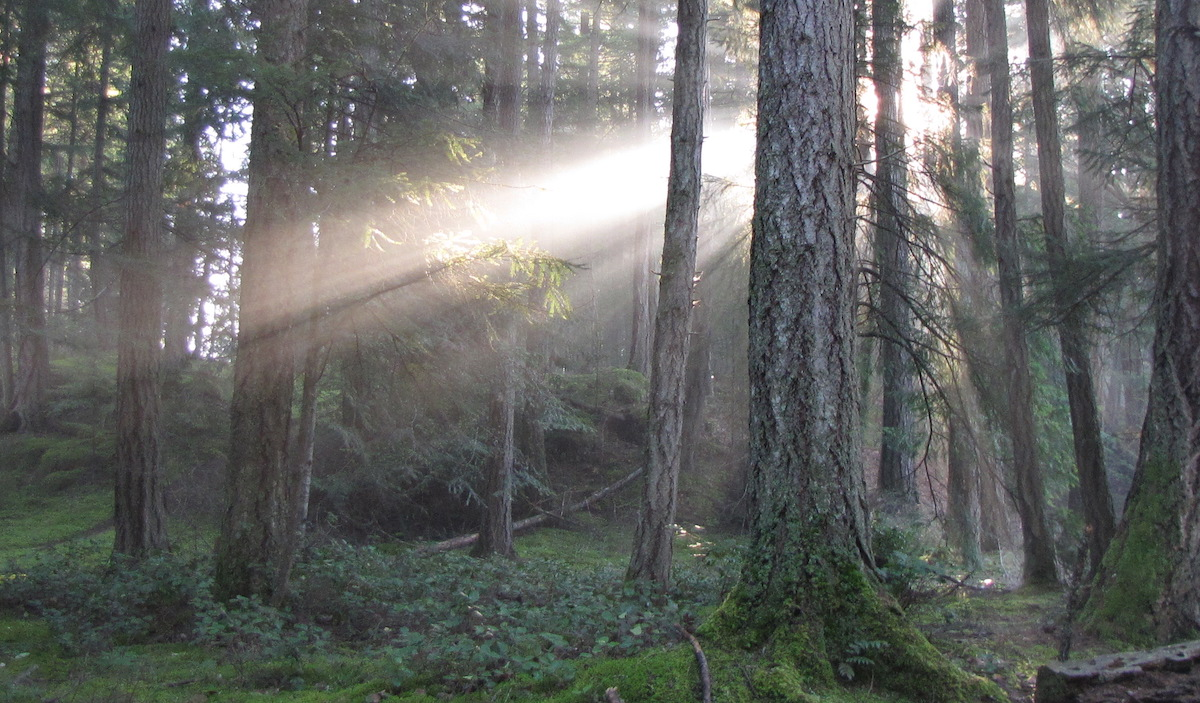 Restorative Forest Therapy - Join us for an introduction to this powerful therapy for relieving stress, and other chronic health issues.