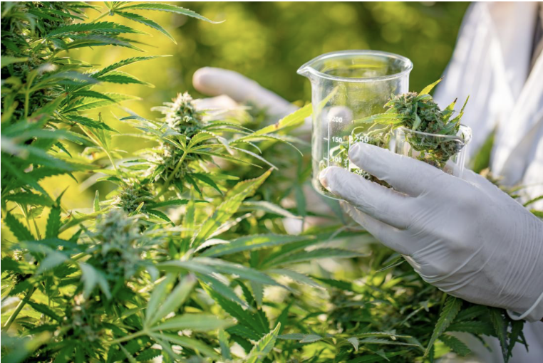 A synthetic version of the CBD that cannabis contains has the potential to become a safe treatment for seizures, new research reports.