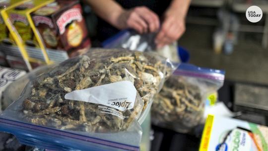 Denver becomes first U.S. city to decriminalize 'magic mushrooms'   (Photo: USAT)