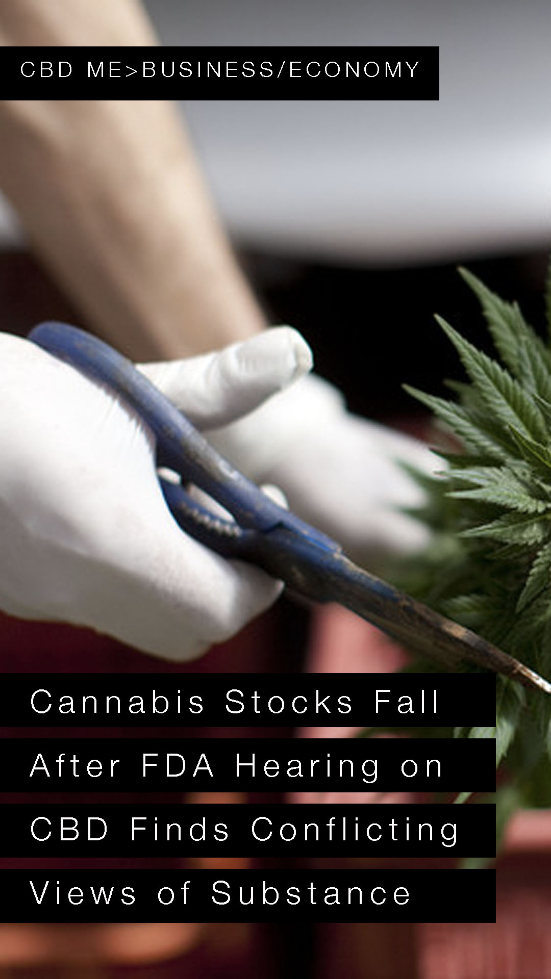 Cannabis Stocks Fall After FDA Hearing on CBD Finds Conflicting Views of Substance | MARKET WATCH