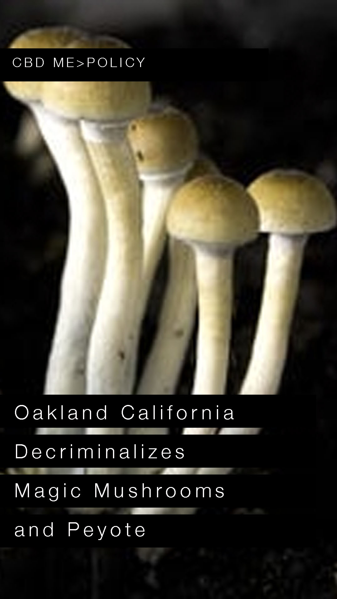 Oakland California Decriminalizes Magic Mushrooms and Peyote | USA TODAY