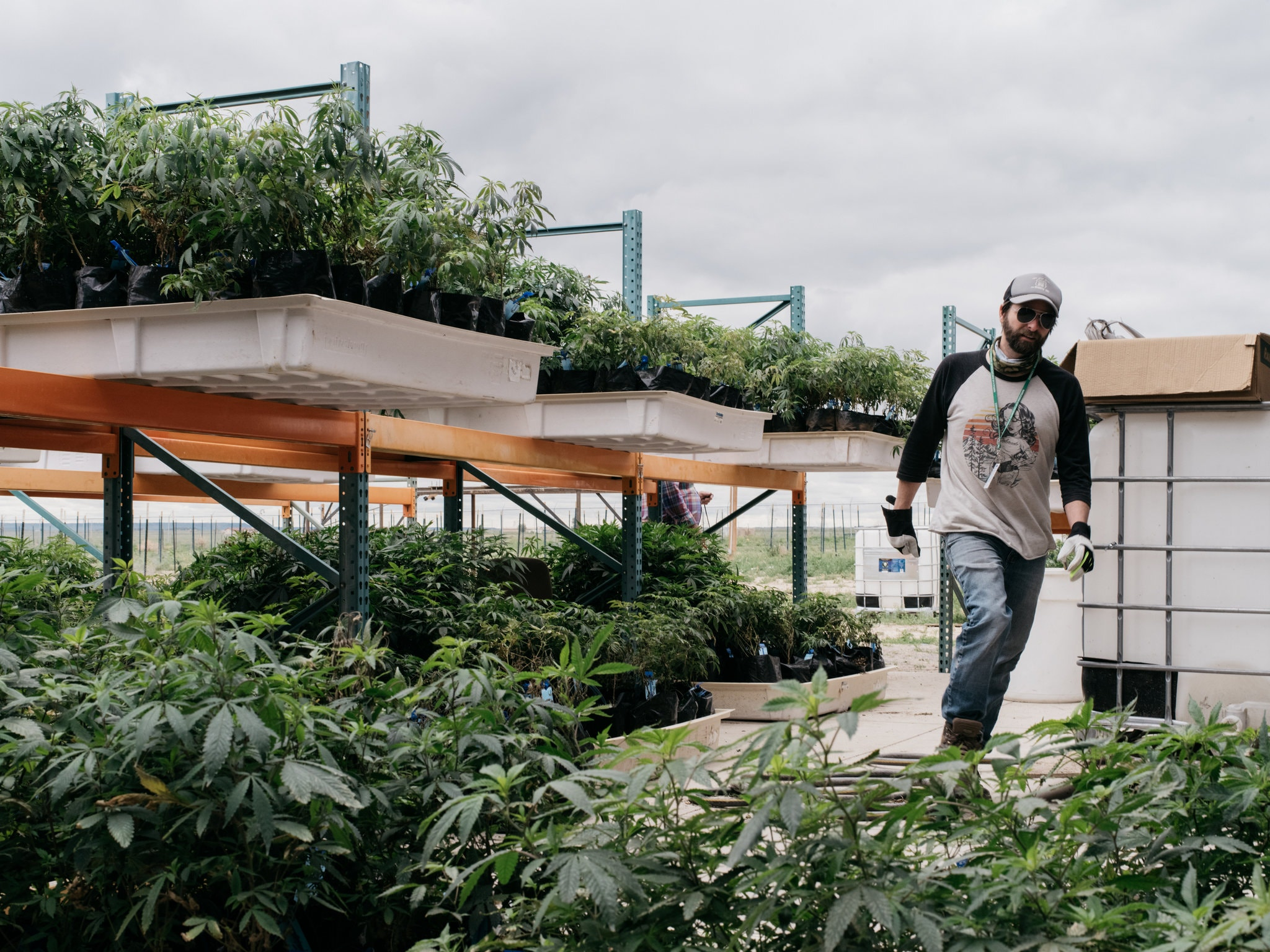 Michael Cole is the owner of Colorado Rocky Mountain Farms, which grows marijuana, in Pueblo.CreditBenjamin Rasmussen for The New York Times