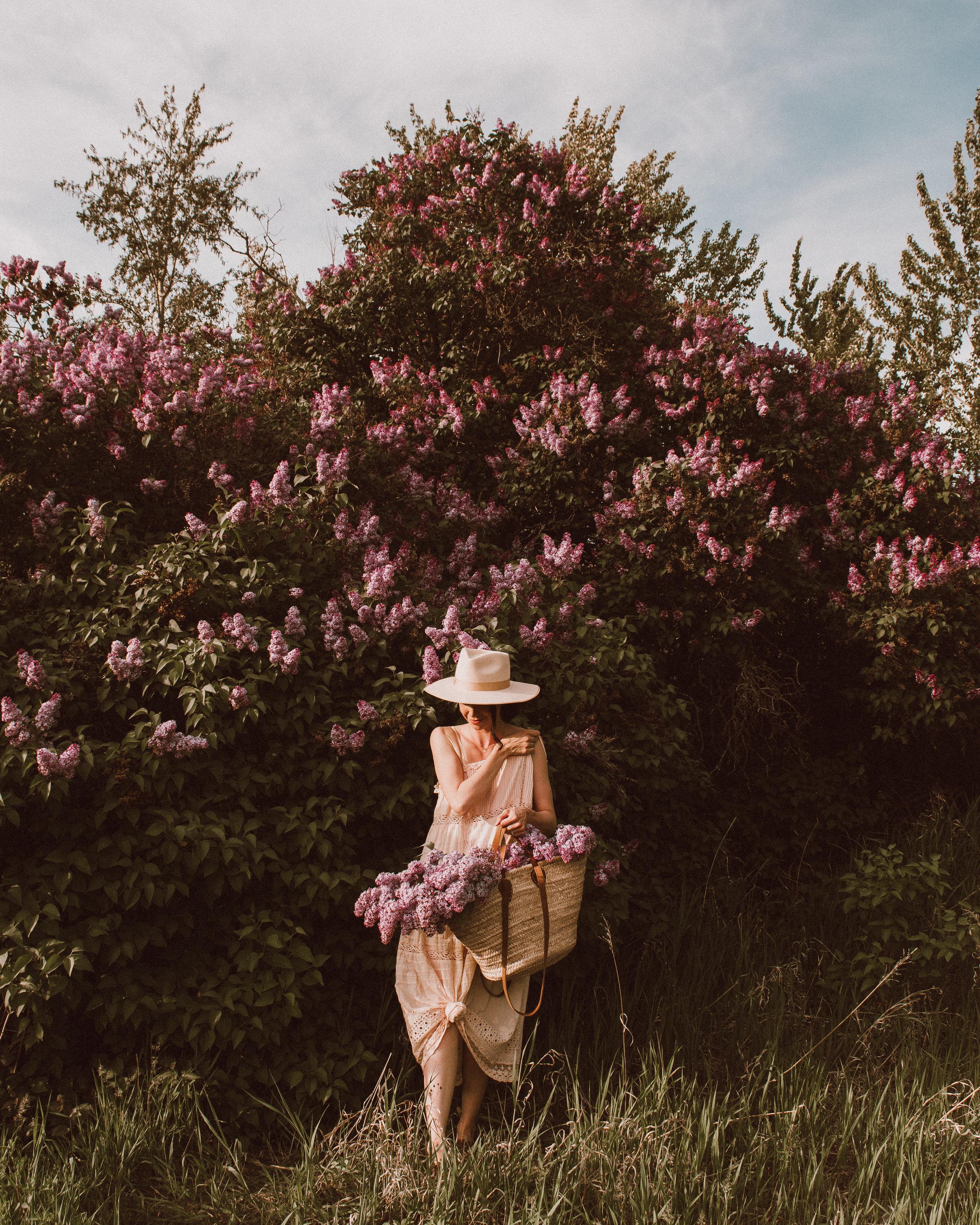 Lilacs vintage