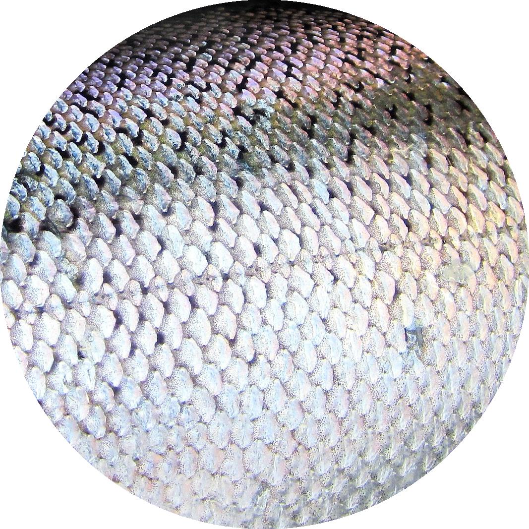 circle_salmon.png