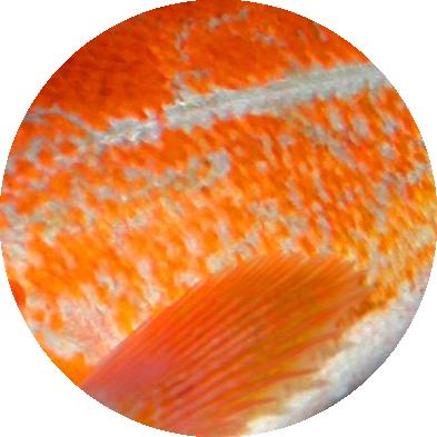 circle_rockfish.png