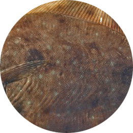 circle_sole.png