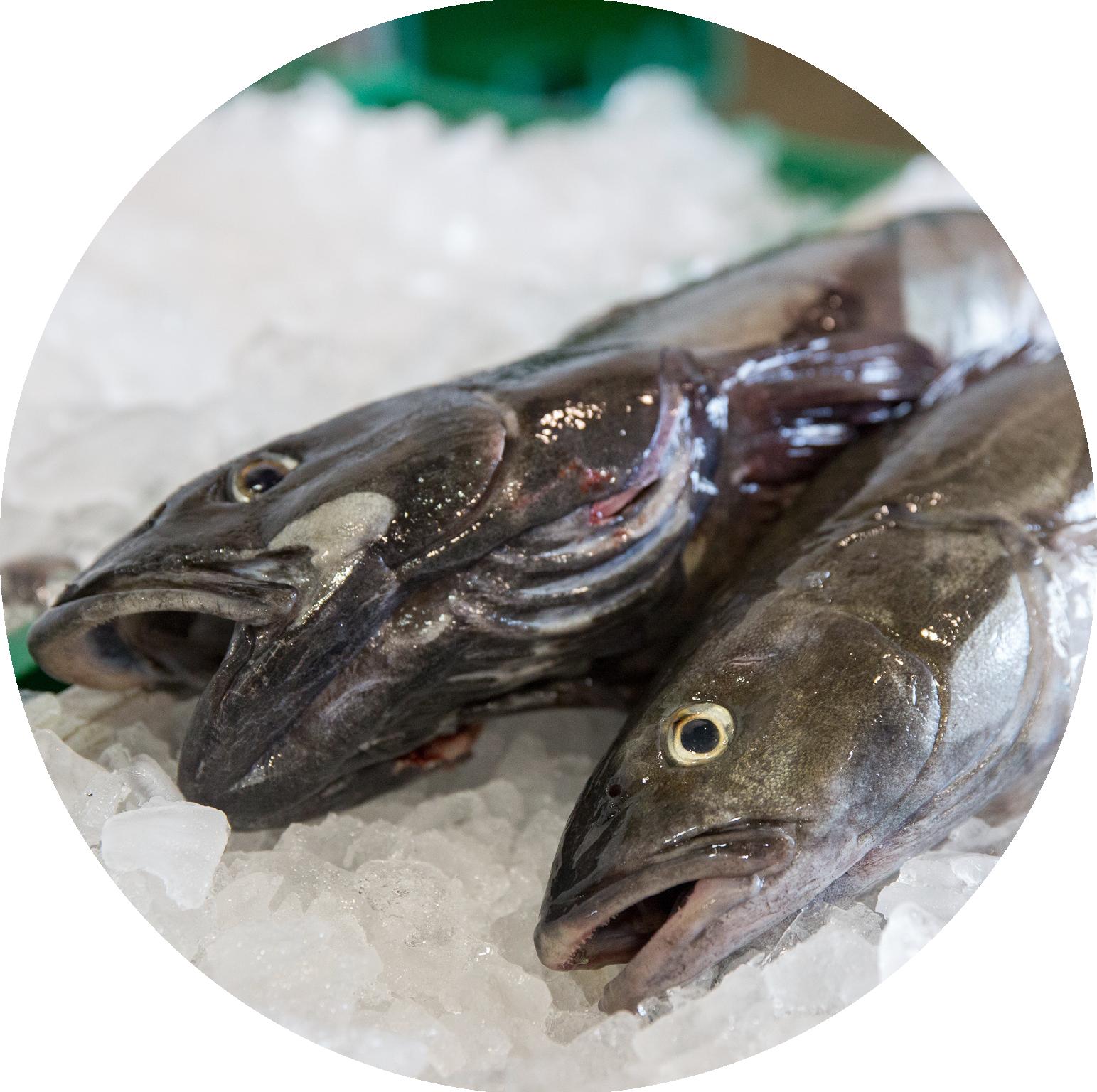 SABLEFISH - AKA Black cod