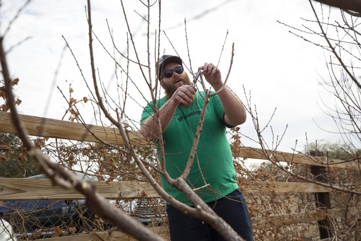 Garden Farms Foundation operations manager Bryan Cabble trims tree branches during a pruning demonstration at a volunteering event at the San Miguel Community Garden located at 3939 Bradley Road in Las Vegas on Saturday, Jan. 12, 2019. Richard Brian Las Vegas Review-Journal @vegasphotograph