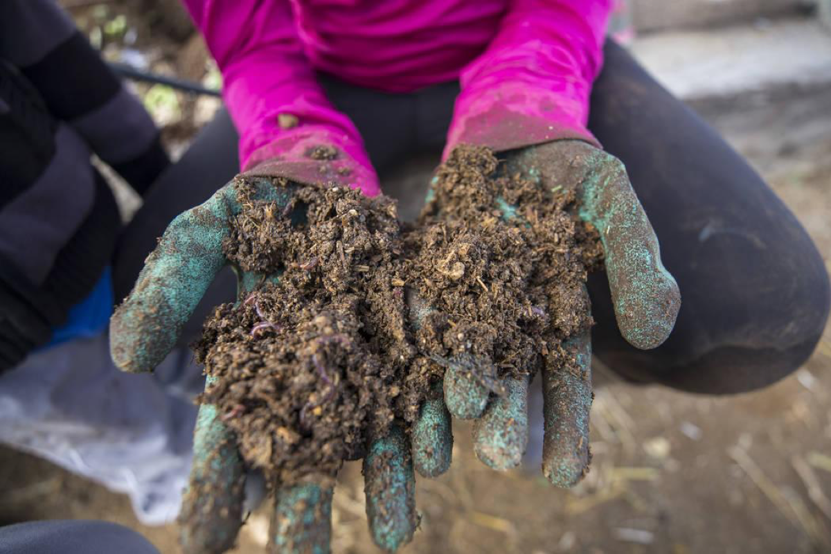 Rebecca Anderson, 9, holds a handful of vermicompost being broken down by red worms during a volunteering event at the San Miguel Community Garden located at 3939 Bradley Road in Las Vegas on Saturday, Jan. 12, 2019. Richard Brian Las Vegas Review-Journal @vegasphotograph