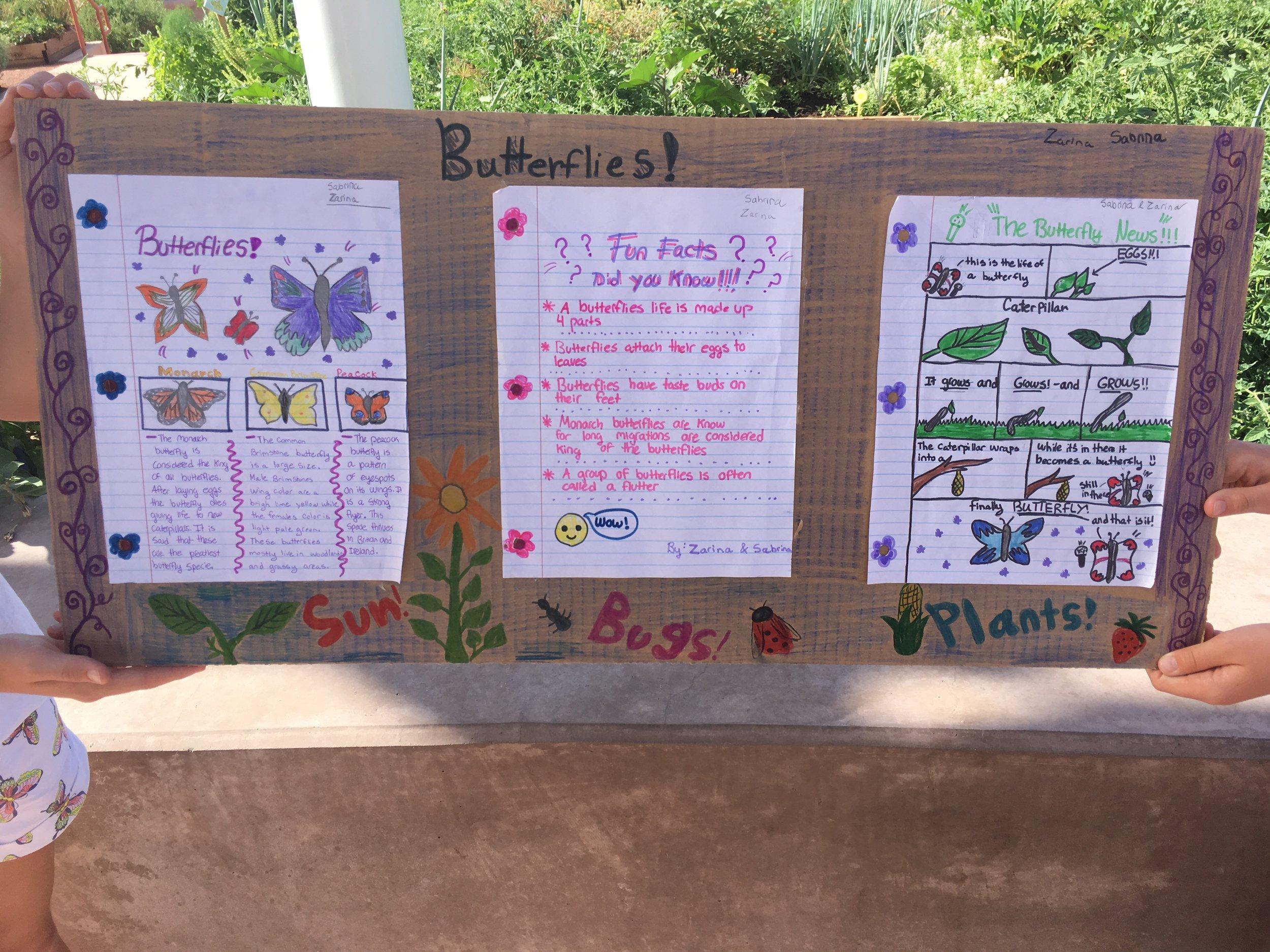 butterflies presentation.JPG