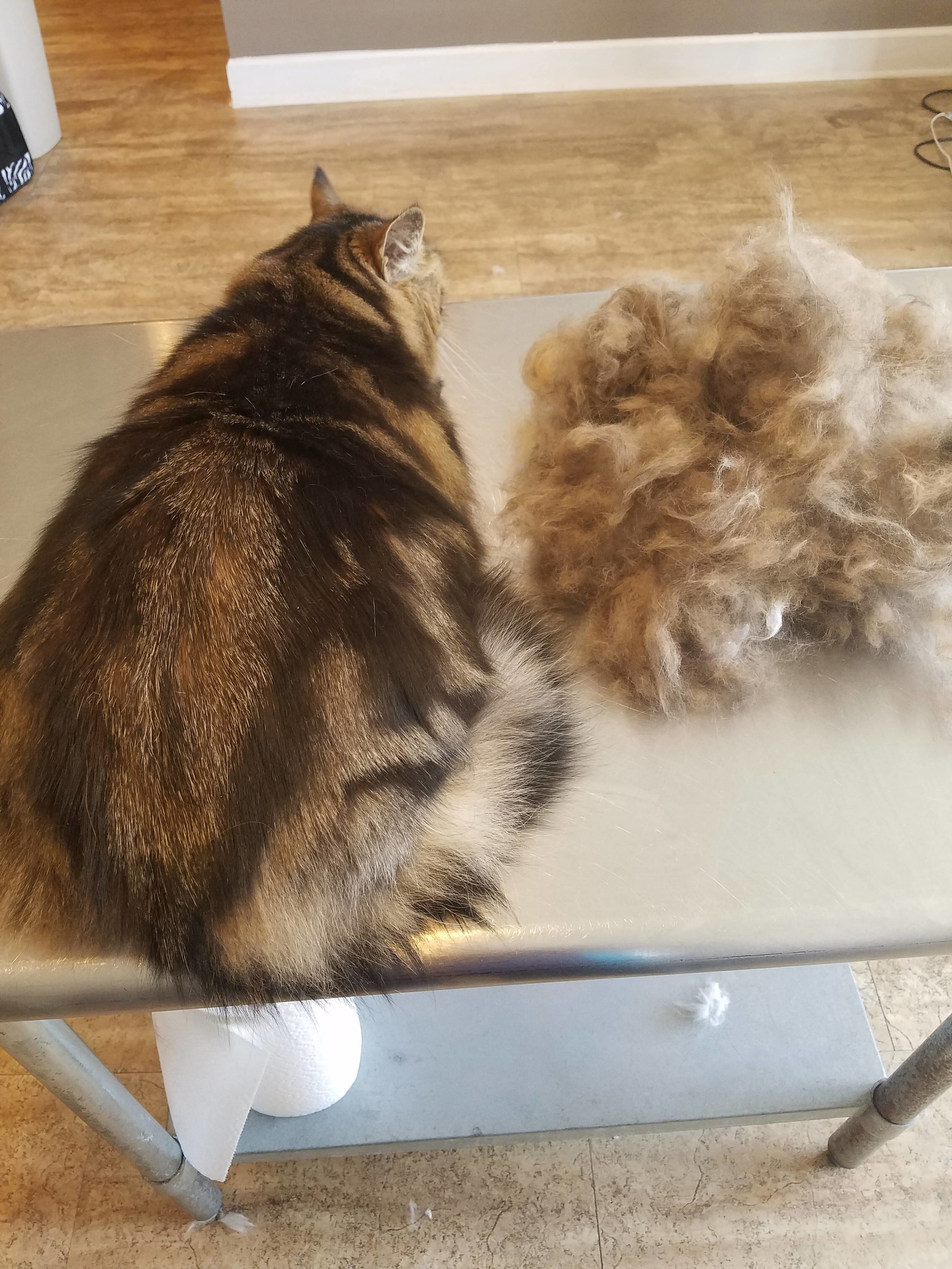 De-Shed Treatment - Tired of wearing your kitty with you everywhere you go or vacuuming a cats worth of hair a regular basis? Our de-shed treatment removes dead coat and can eliminate up to 80% percent of shedding.De-shed treatment includes bath, nail trimming and ear cleaning.Short hair cats under12 lbs $66Short hair cats 12lb and up $80Long Hair cats $80