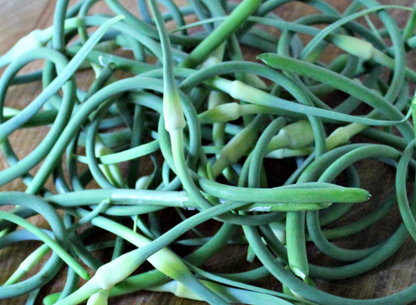 scapes.png