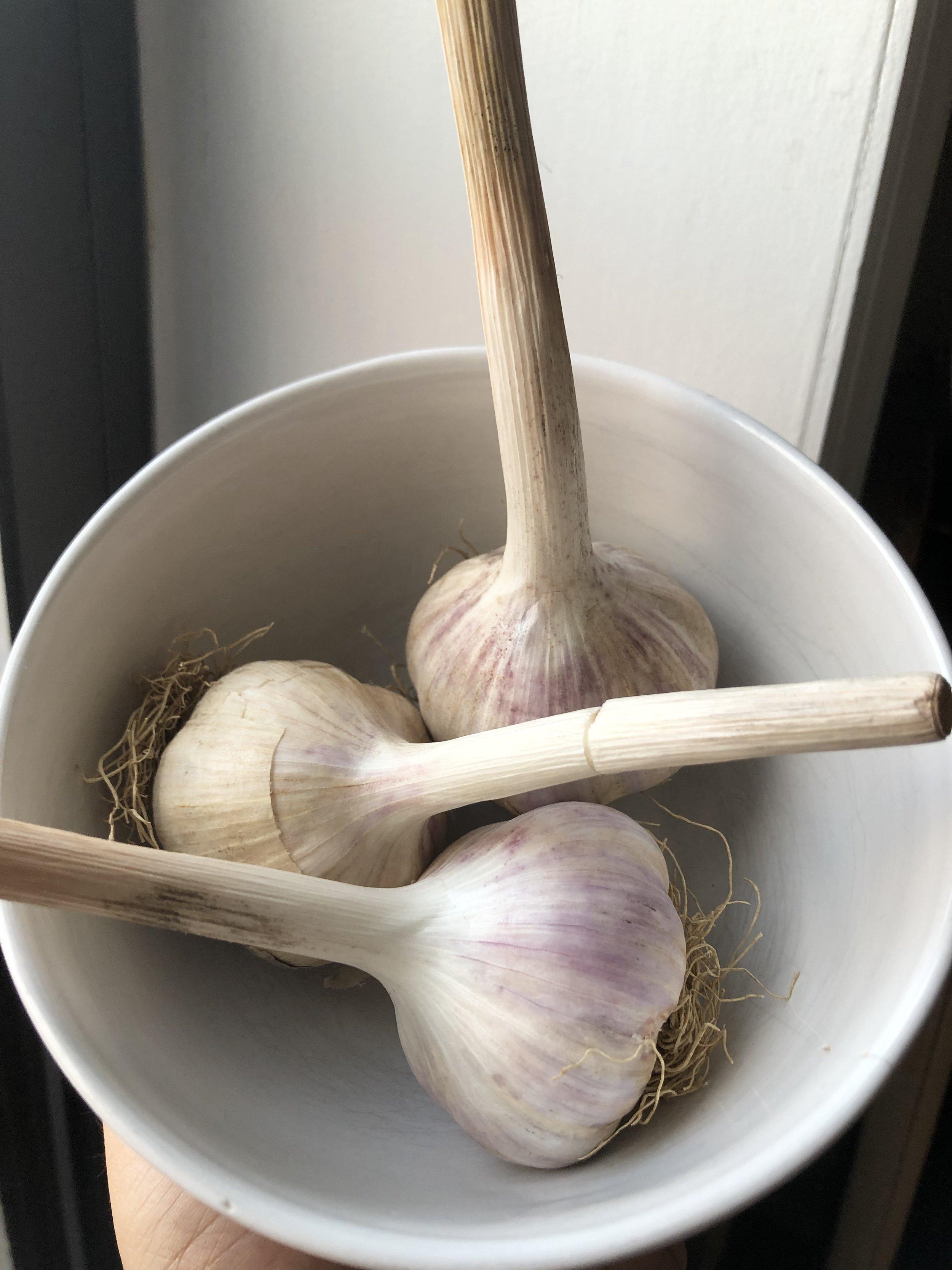 Garlic Share first Distribution