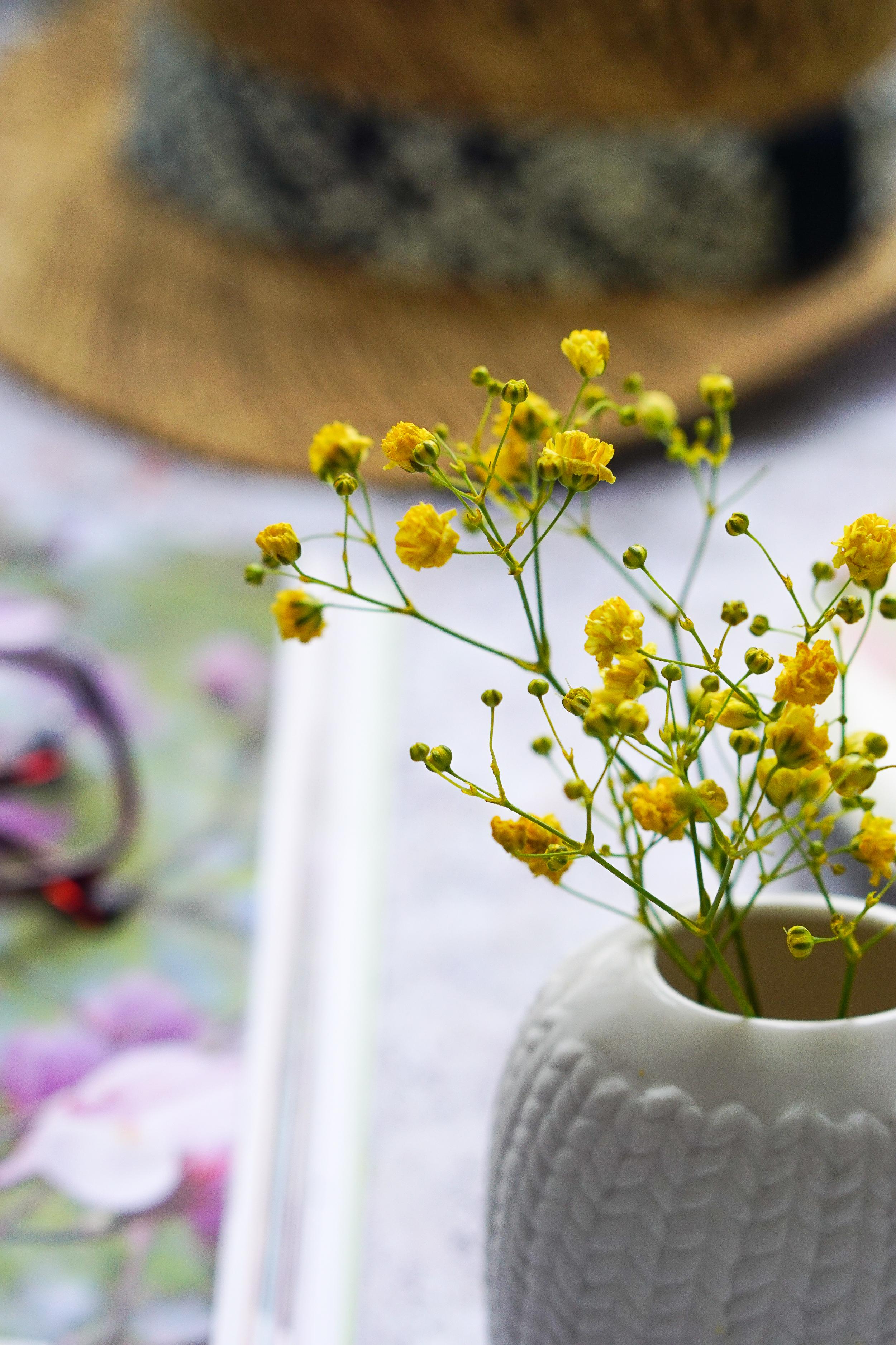 Gardening books for beginners