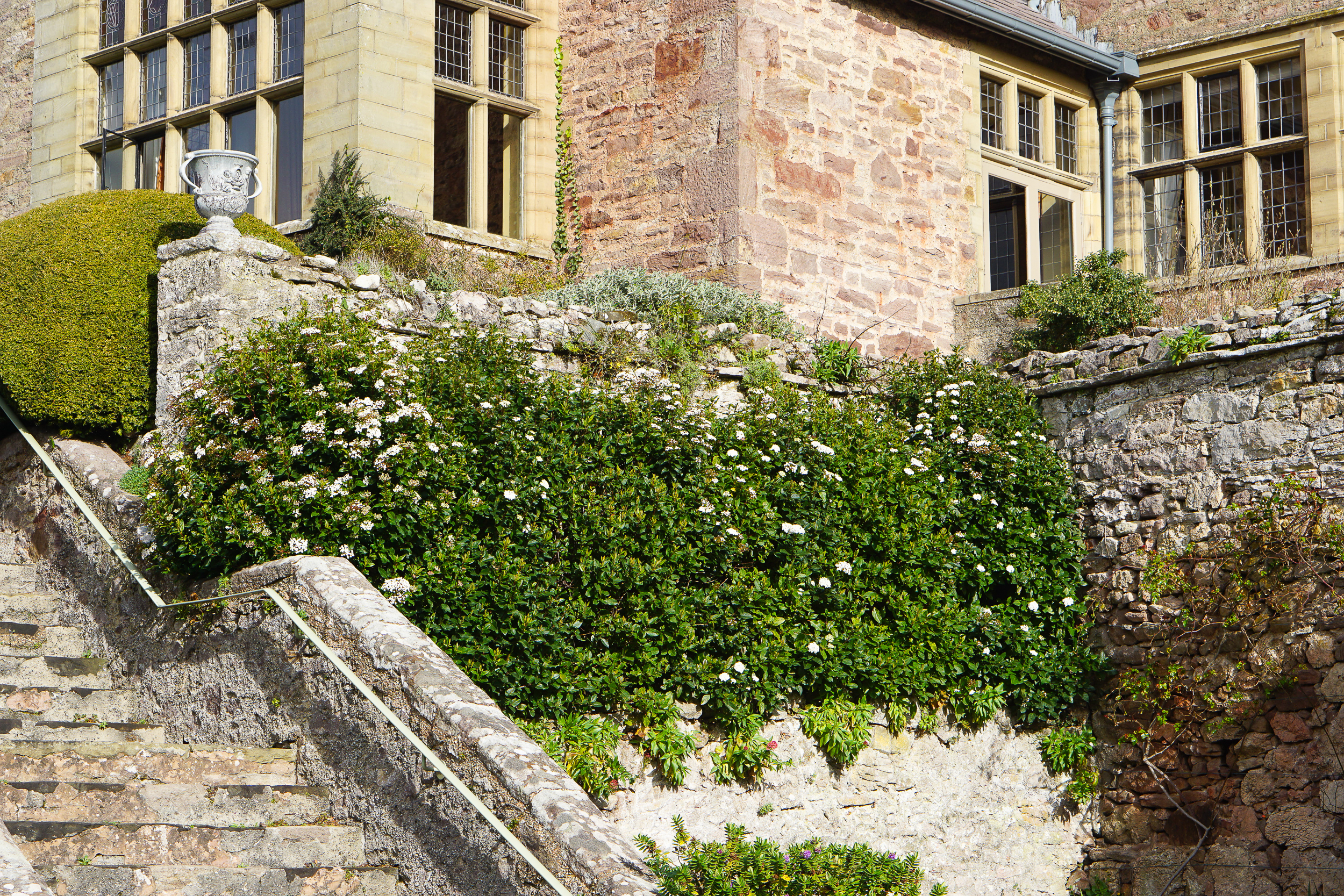 Bodysgallen Hall Garden Tours