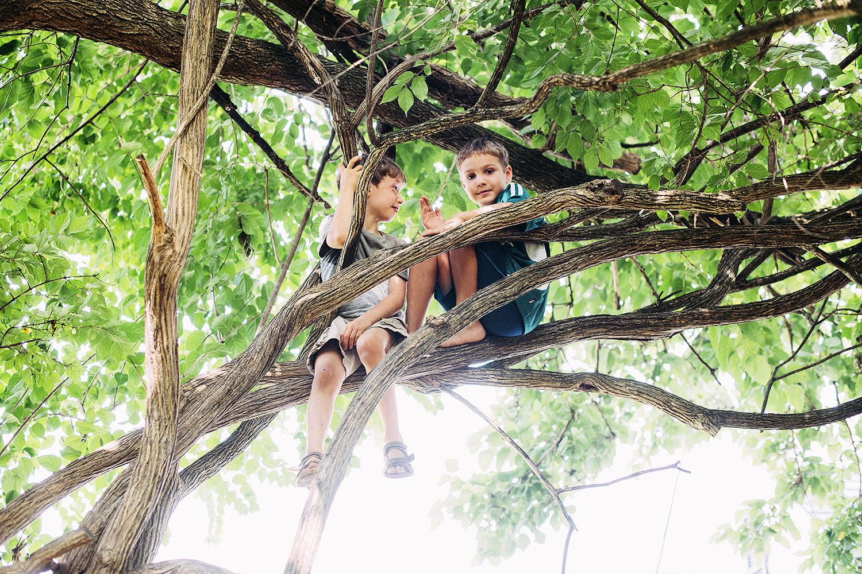 children on tree branches.jpg