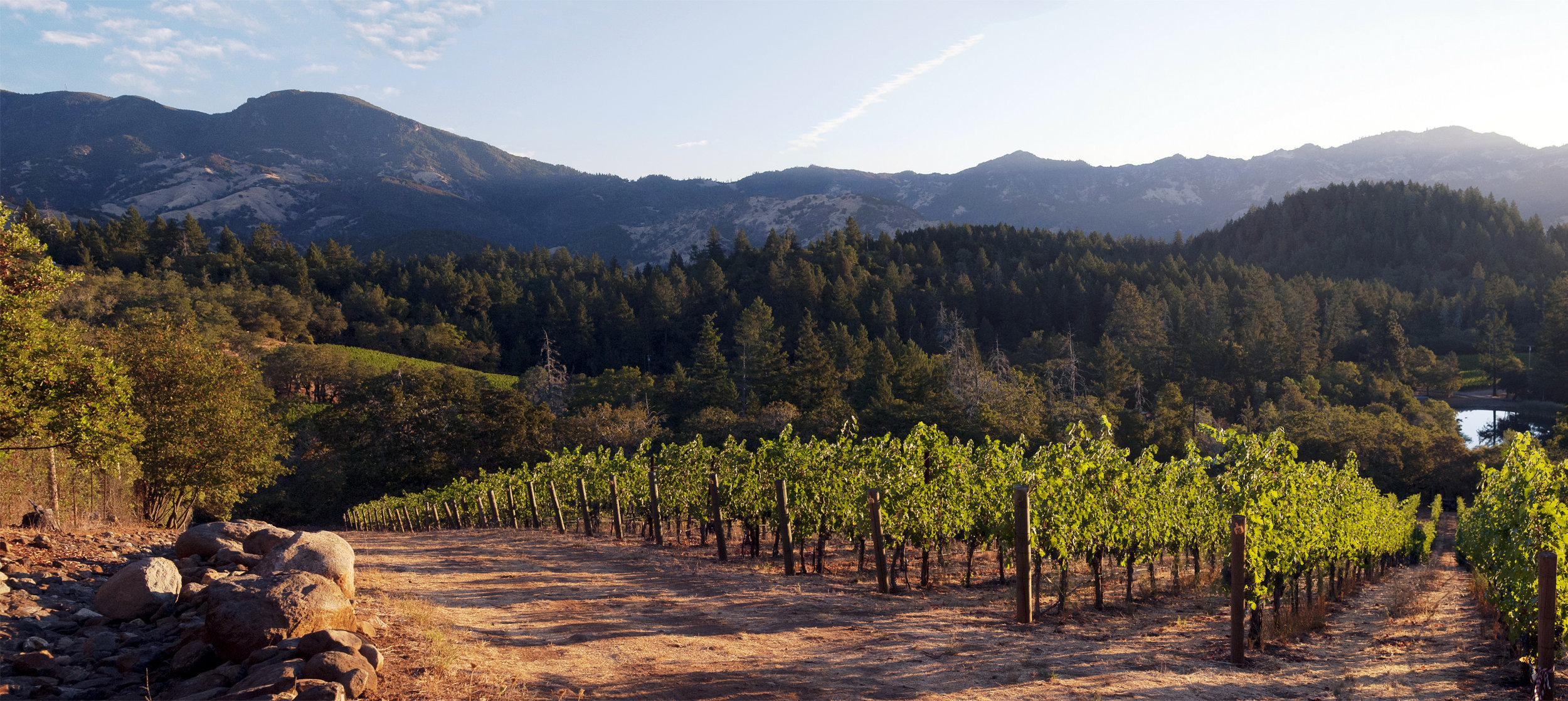 Treva's Vineyard at Dawn.jpg