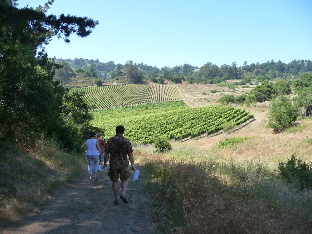 Vineyard trek through Alfaro Vineyards
