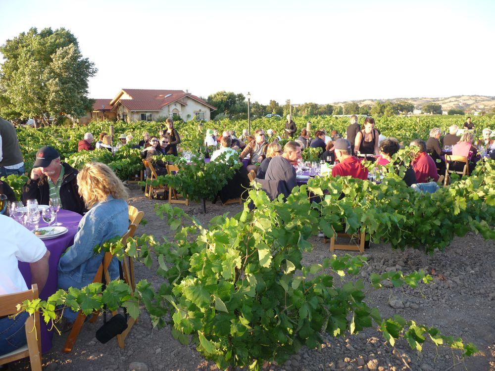 Dinner in the vineyards at Dusi Vineyards