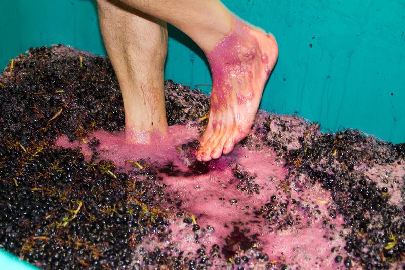 Foot stomping at Villa Creek Winery