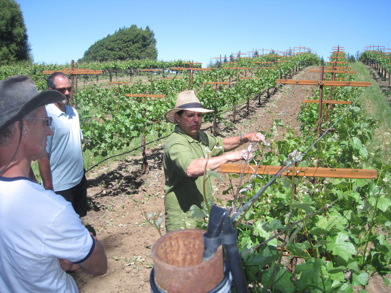 Dan Tomola of Mariah Vineyards giving an impromptu pruning lesson