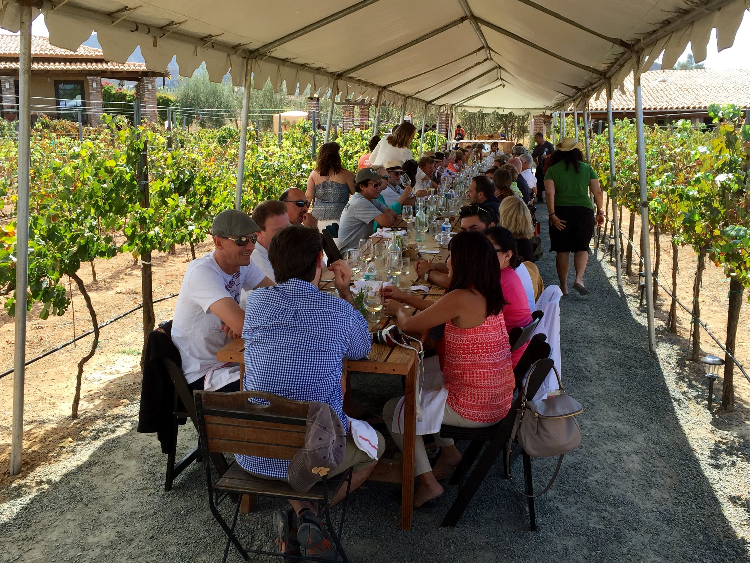 "Vineyard lunch at Lechuza. The food was prepared by the chefs at Laja next door, AKA the ""French Laundry of Mexico."""